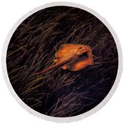 Ray In The Grass Flats Round Beach Towel