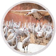 Ready Or Not, Here I Come -- Sandhill Cranes Round Beach Towel