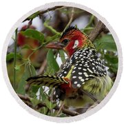 Red-and-yellow Barbet Round Beach Towel