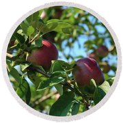 Round Beach Towel featuring the photograph Red Apples In The Apple Tree by Tatiana Travelways