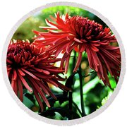 Red Chrysanthemums Round Beach Towel