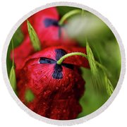 Red Corn Poppy Flowers With Dew Drops Round Beach Towel