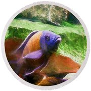 Red Fin Borleyi Cichlid Rising Round Beach Towel