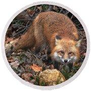 Red Fox Dmam0049 Round Beach Towel