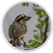 Red-fronted Barbet Round Beach Towel
