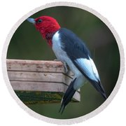 Red-headed Woodpecker Perched Round Beach Towel