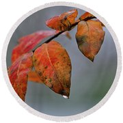 Red Leaves Of Winter Round Beach Towel