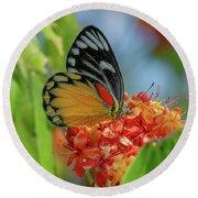 Round Beach Towel featuring the photograph Red-spot Jezebel Butterfly Dthn0237 by Gerry Gantt