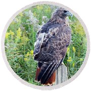 Red-tailed Hawk On Fence Post Round Beach Towel