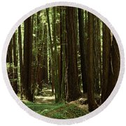 Redwood Trees Armstrong Redwoods St Round Beach Towel