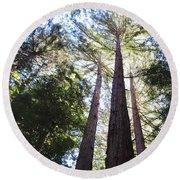 Redwoods, Blue Sky Round Beach Towel