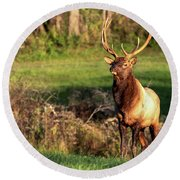 Round Beach Towel featuring the photograph Regal Bull by Rod Best