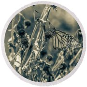 Resting Butterfly Bw Round Beach Towel