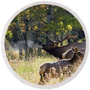 Round Beach Towel featuring the photograph Rocky Mountain Bull Elk Bugeling by Nathan Bush