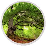 Roots Of Taymouth Estate - Scotland - Beech Tree Round Beach Towel