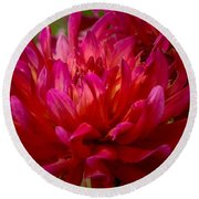 Ruby Red Dahlia Round Beach Towel