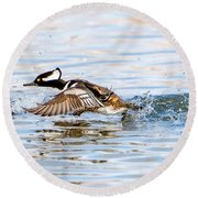 Running Take Off -- Hooded Merganser Round Beach Towel