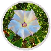 Round Beach Towel featuring the photograph Sacred Datura In The Golden Hour by Judy Kennedy