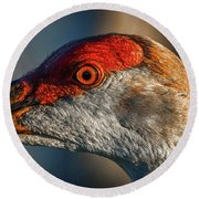 Round Beach Towel featuring the photograph Sandhill Close Up Portrait by Tom Claud