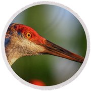Round Beach Towel featuring the photograph Sandhill Sunlight Portrait by Tom Claud
