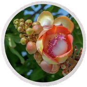 Sara Tree Or Cannonball Tree Flower And Buds Dthn0264 Round Beach Towel