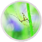Say Hello To My Little Green Insect Friend Round Beach Towel