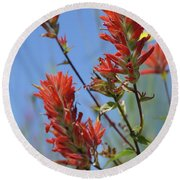 Scarlet Indian Paintbrush At Mount St. Helens National Volcanic  Round Beach Towel