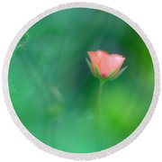 Scarlet Pimpernel Round Beach Towel