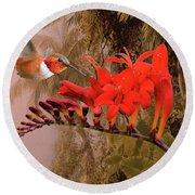 Scarlet Sage And Hummingbird Round Beach Towel