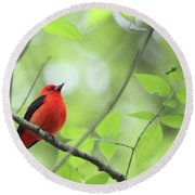 Round Beach Towel featuring the photograph Scarlet Tanager by Rick Veldman