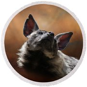 Round Beach Towel featuring the photograph Scenting The Air - Striped Hyena by Debi Dalio