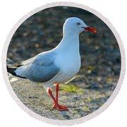 Seagull On The Breakwall Round Beach Towel