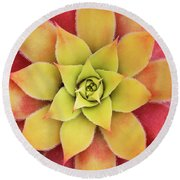 Sempervivum Chick Charms Gold Nugget Round Beach Towel