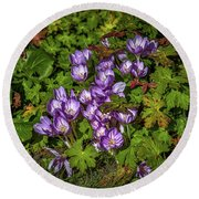 September Crocus #h9 Round Beach Towel