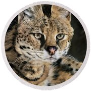 Serval Portrait Wildlife Rescue Round Beach Towel