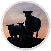 Round Beach Towel featuring the photograph Sheep Family by Anjo Ten Kate