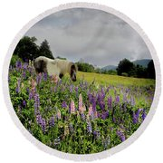 Round Beach Towel featuring the photograph Shetland In A Lupine Field by Wayne King