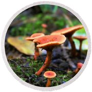 Round Beach Towel featuring the photograph Shrooms by Candice Trimble