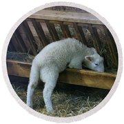 Shy Little Lamb Round Beach Towel