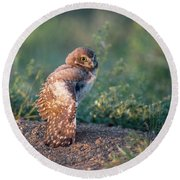 Shy Young Burrowing Owl Round Beach Towel