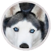 Round Beach Towel featuring the painting Siberian Husky Mask A91818 by Mas Art Studio
