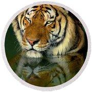 Siberian Tiger Reflection Wildlife Rescue Round Beach Towel