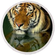 Round Beach Towel featuring the photograph Siberian Tiger Reflection Wildlife Rescue by Dave Welling