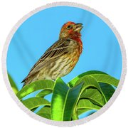 Singing House Finch Round Beach Towel