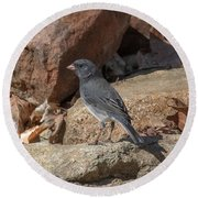 Slate-colored Junco Dsb0339 Round Beach Towel