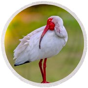 Sleepy Ibis Round Beach Towel