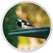Small Magpie Lark Outside In The Afternoon Round Beach Towel