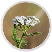 Round Beach Towel featuring the photograph Small White Flowers by Scott Lyons