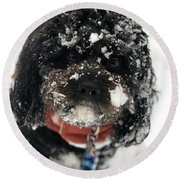 Snow Dog 11 Round Beach Towel