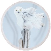 Snowy Owl Feather Shake Round Beach Towel